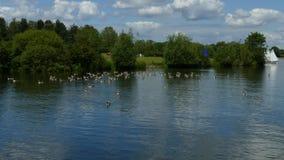 Barcos, animais selvagens e um lago imagens de stock royalty free