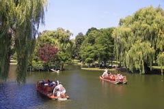 Barcos da cisne no lago, jardim público em Boston Fotos de Stock Royalty Free