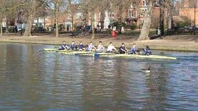 Barcos de los eights de Coxed sculling en un río almacen de metraje de vídeo