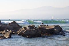 Barcos de navigação e gaivotas imagens de stock