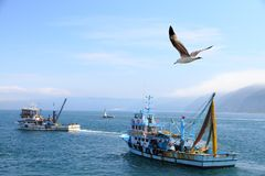 Barcos de pesca Foto de archivo