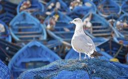 Barcos de pesca azuis Imagem de Stock