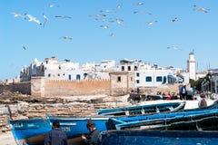 Barcos de pesca y gaviota azules en Essaouira - Marruecos Foto de archivo libre de regalías