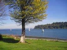 Barcos de vela en el sonido de Puget Fotografía de archivo