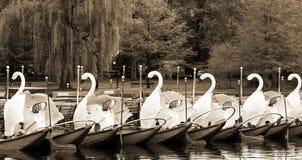 Barcos del cisne en Boston fotos de archivo libres de regalías