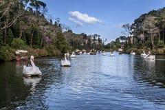 Barcos del cisne en el lago oscuro Gramado el Brasil Imagen de archivo