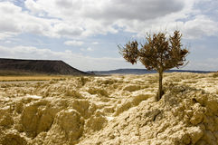 Bardenas Reales Stock Images