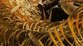 Bardick-Schlange auf getrockneten Blättern stock video
