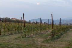 bardolino的葡萄园 免版税库存照片