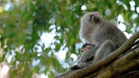 Bardzo śliczna mamy małpa, dziecko i zdjęcie wideo
