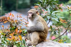 Bardzo Śliczna obsiadanie małpa obraz royalty free