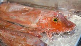 Bardzo świeża egzot ryba Zdjęcia Royalty Free