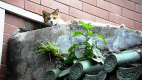 Bardzo ciekawy kot zbiory