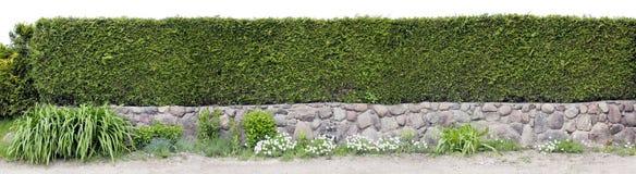 Bardzo długiej zieleni ogrodzenie Zdjęcia Stock