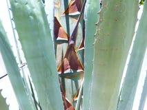 Bardzo dokładne spojrzenie przy bazą antyczna wiek roślina i swój kwiatu badyl Zdjęcie Stock
