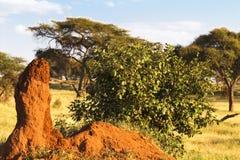 Bardzo duży osamotniony termitary w sawannie Tanzania, Afryka Fotografia Stock