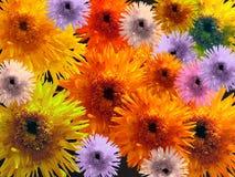 bardzo kolorowe kwiaty zdjęcie royalty free