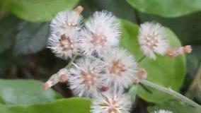 Bardzo bardzo mali naturalni kwiaty Zdjęcia Royalty Free