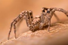 Bardzo malutki pająk Zdjęcie Stock