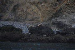 Bardzo niski przypływ Zdjęcie Royalty Free