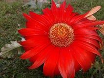 Bardzo piękni kwiaty Zdjęcie Stock