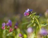 Bardzo piękni wiosna lasu kwiaty Obrazy Royalty Free