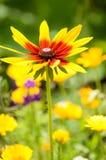 Bardzo piękny kwiat Zdjęcia Royalty Free