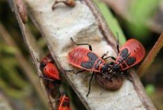 bardzo połuszczą robaki Zdjęcia Royalty Free