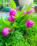 Bardzo rzadcy kwiaty Obrazy Royalty Free