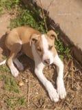 bardzo słodki pies Fotografia Stock