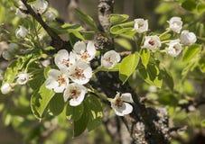 Bardzo stary bonkrety drzewo w kwiacie obrazy stock