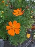 bardzo uroczy kwiat fotografia stock