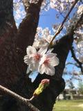bardzo uroczy kwiat zdjęcia stock
