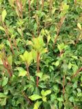 bardzo wypięknia zielonej trawy Zdjęcie Royalty Free