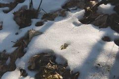 Bardzo zbliżenie szczegół trawa i śnieg Zdjęcia Royalty Free