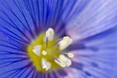 Bardzo zbliżenie kwiatu stamen Fotografia Stock