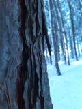 Bardzo zimna zima Zdjęcie Royalty Free