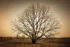 Bare alone tree on dark background Stock Photos
