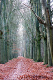 Bare autumn trees. In the forrest and falling leaves stock images