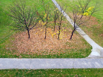 Bare autumn trees in park royalty free stock photos