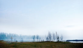 Bare birch trees by foggy river Royalty Free Stock Photo