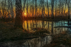 Bare birch trees reflected in dark river Stock Images