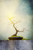 Bare bonsai tree with flare Stock Images