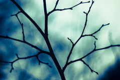 Bare branch Royalty Free Stock Image