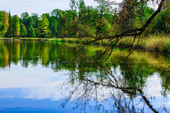 Bare Branch of Tree Reflected in Lake Stock Photo