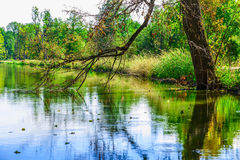 Bare Branch of Tree Touching Surface of Water Stock Photo