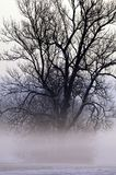 Bare branched tree and mist Royalty Free Stock Photo