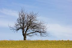 Bare-branched tree at springtime royalty free stock photos