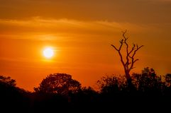 Bare-branched tree at sunset Royalty Free Stock Photos