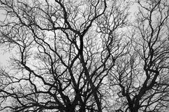 Bare Branches 1. A black-and-white pattern of intertwined bare branches Royalty Free Stock Images